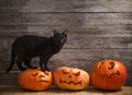 Cat With Orange Halloween Pumpkin On Wooden Background Royalty Free Stock Image - 96663216