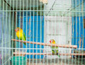 A Two Love Bird Royalty Free Stock Photography - 96798947