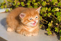 Curious Kitty Royalty Free Stock Photography - 9682837