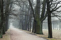 Bare Trees Grow In A Rows Along Park Road In Fog Stock Images - 96870194