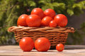 Tomatoes Stock Photos - 96893683