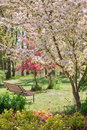 Beauty Tree In Bloom With Bench Royalty Free Stock Photo - 9692325