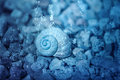 Snail Shell Under Water Stock Photo - 96925270