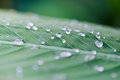 Water Drops On A Leaf After The Rain Royalty Free Stock Photos - 96959238