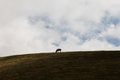 Cow And Sky Royalty Free Stock Image - 96994686