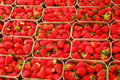 Strawberry Royalty Free Stock Photography - 975487
