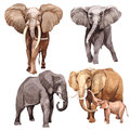 Exotic  Elephant Wild Animal In A Watercolor Style Isolated. Stock Photo - 97029820
