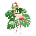 Pink Flamingo With Green Tropical Monstera Leaf Illustration Stock Images - 97035284