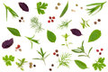 Fresh Spices And Herbs Isolated On White Background. Dill Parsley Basil Thyme Tartun Peppercorns. Top View Stock Image - 97053911