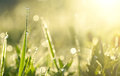 Green Grass With Dew Drops In Sunlight On A Summer Meadow Stock Images - 97054434