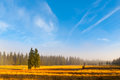 Autumn Landscape Sunny And Hazy Morning With Two Spruces, Near Bozi Dar, Krusne Mountains, Czech Republic Stock Image - 97125781