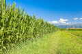 Field Of Corn, Mountains And Blue Sky With Clouds. Stock Photos - 97173963