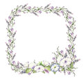 Background With Watercolor Drawing Wild Flowers, Round Floral Frame, Wreath With Painted Field Plants, Herbal Border Royalty Free Stock Photography - 97196627