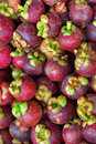 Mangosteen Stock Photo - 9721280