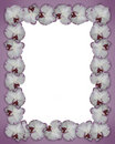 Orchids Border Purple Stock Images - 9726484