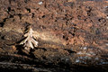 Decaying Log With Leaf Stock Images - 97260974