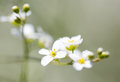 Small White Flowers On The Nature Stock Image - 97284501