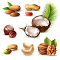 Nuts Realistic Set Stock Image - 97287581