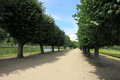 Lime Tree Alley Stock Images - 97287664