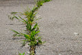 Green Plants Growing In Cracked Asphalt Road Texture Stock Photos - 97296683