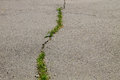Green Plants Growing In Cracked Asphalt Road Texture Royalty Free Stock Photography - 97296757