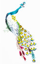 Peacock On White Paper Stock Photography - 97317442