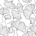 Vector Seamless Pattern With Outline Gingko Or Ginkgo Biloba Leaves In Black On The White Background. Floral Pattern With Gingko. Royalty Free Stock Photos - 97359908