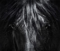 Portrait Close Up Spanish Purebred Horse With Long Mane. Stock Photography - 97360472