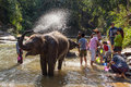 Baby Elephant Bathing In River Near Chiang Mai, Thailand Stock Photography - 97366112
