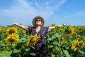 Attractive Middle Age Woman In Straw Hat With Arms Outstretched In Sunflower Field, Celebrating Freedom. Positive Emotions Feeling Royalty Free Stock Photo - 97373005
