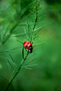 Ladybird Royalty Free Stock Photography - 97378057