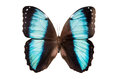 Tropical Butterfly Isolated Royalty Free Stock Photo - 97413325
