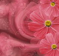 Floral  Red Beautiful Background. Flower Composition. Postcard With Red Flowers Of Daisies On A Pink-red  Background. Royalty Free Stock Photos - 97451598