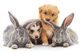 Two Rabbits And Two Puppies. Stock Photo - 97452420