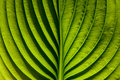 Green Leaf Royalty Free Stock Photo - 9756765