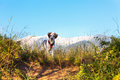 Fuzzy Dog In Green Grass And High Mountains And Blue Sky At Background, Freedom Travel Concept, Copy Space Royalty Free Stock Images - 97604729