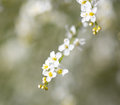 Small White Flowers On The Nature Royalty Free Stock Photography - 97654977