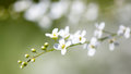 Small White Flowers On The Nature Stock Image - 97654991