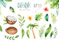 Hand Drawn Watercolor Tropical Plants Set . Exotic Palm Leaves, Jungle Tree, Brazil Tropic Botany Elements And Flowers Stock Image - 97685821