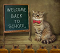 Cat Teacher At Blackboard 2 Stock Image - 97695701