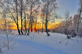 Winter Landscape With Red Sunset In A Snowy Birch Forest Royalty Free Stock Photos - 97698488