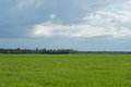 Sky And Grass Background, Fresh Green Fields Under The Blue Sky In Summer Stock Photo - 97699860