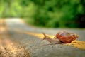 Snail Crosses The Yellow Line On Street,  Business And Finance C Stock Photo - 97726500
