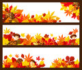 Autumn Leaf Banner Border For Fall Season Design Stock Images - 97730294