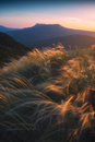 Valley Of Feather Grass Royalty Free Stock Image - 97738416