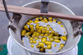 Silk Production Process, Boiling Silkworm Cocoon Royalty Free Stock Image - 97739816