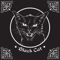 Hand Drawn Black Cat Head In Frame Over Black Background And Ornate Gothic Design Elements. Wiccan Familiar Spirit, Pagan Witchcra Royalty Free Stock Image - 97743406