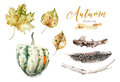 Set Of Red And Yellow Autumn Watercolor Leaves And Berries, Hand Drawn Design Foliage Elements Decoration. Branches And Royalty Free Stock Photo - 97761095