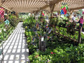 Flower And Plant Display, Botanical Garden Centers, Claremont, California, USA Royalty Free Stock Photos - 97786948