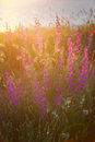 Wild Flowers Royalty Free Stock Photography - 97834827